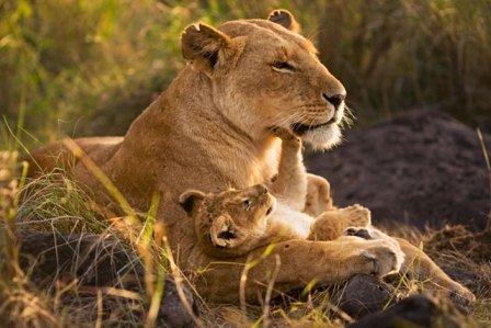 aslan anneleri2