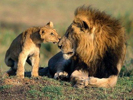 aslan babalari2