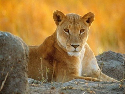 aslan burcu kadinlari ile evlilik