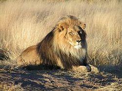 aslan burcu1
